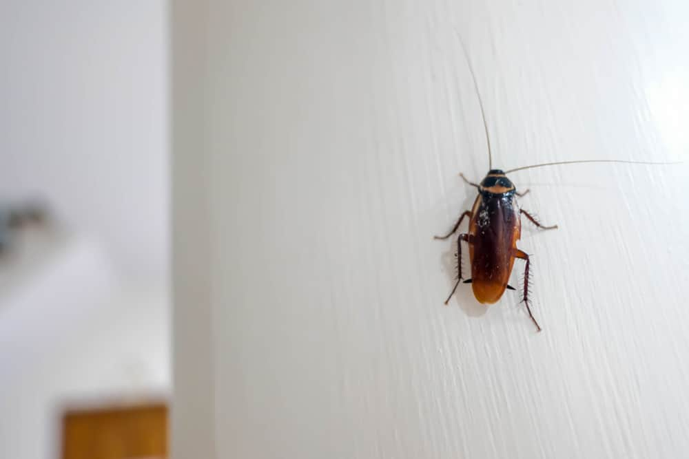 roaches-in-house