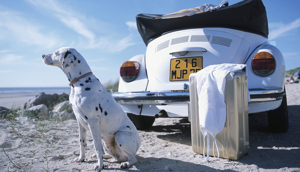 Dalmatian, Car and Suitcase