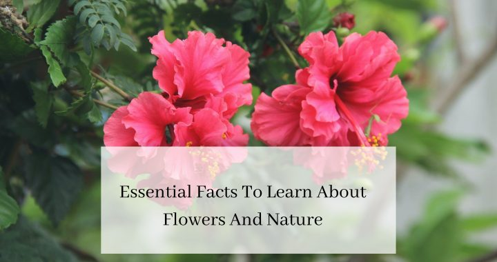 Essential Facts To Learn About Flowers And Nature