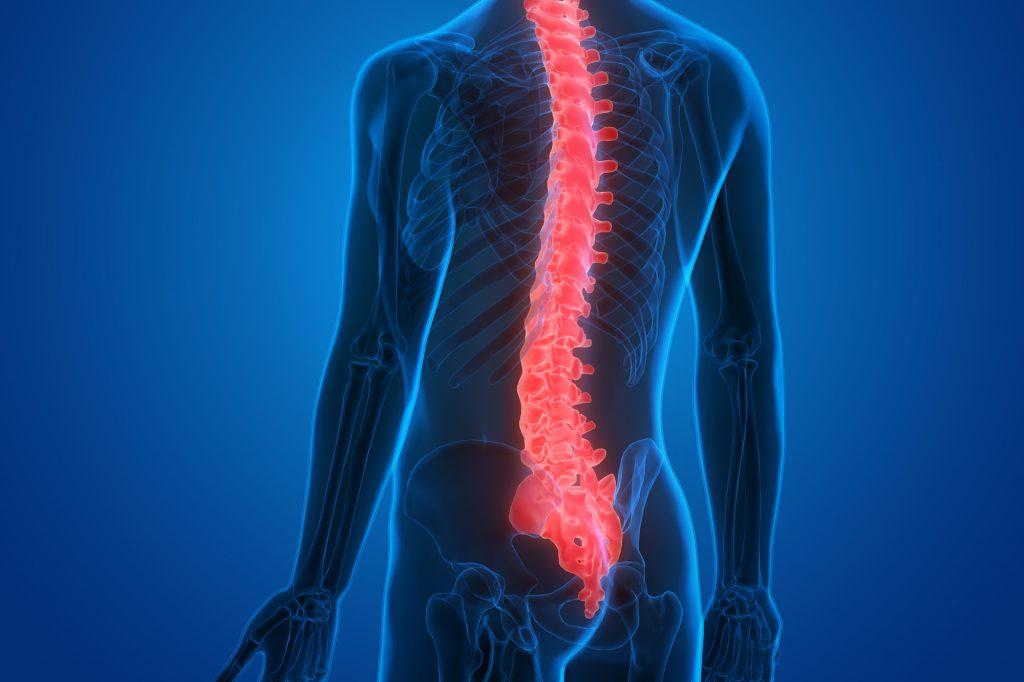 Human-Spinal-Cord